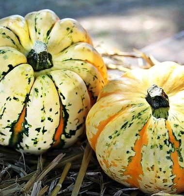 Expect Hay Bales, Haunted Houses and More at Eden Farms